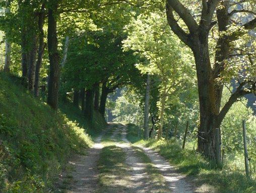 Baumgesäumter Weg- Wegbegleitung und Coaching
