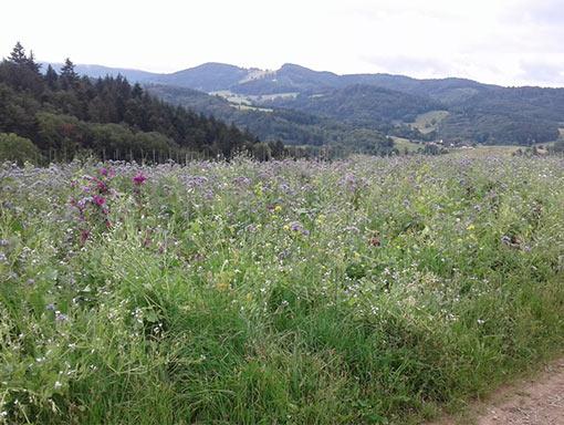 Spaziergänge in der Natur -Chael Mayer